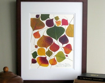 Pressed leaf print, 11x14 double matted, Chinese Tallow leaves, wall decor no. 0044