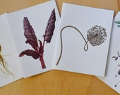 Botanical Art Cards, Series 03 - Vegetables
