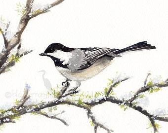watercolor bird- Black-capped Chickadee- art print