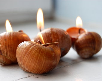 Scented Candles - Snails Shell Candles - Hygge Home Decor - Handmade Eco-friendly Candles - Set of 6 - Home Scents - Little Luxuries, Gift