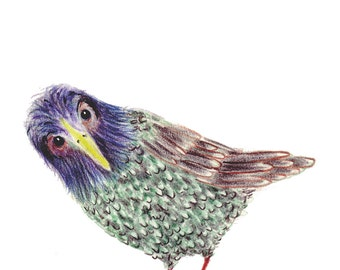 Starling One - The Sister - Original Colour Pencil Drawing - 8 x 6 inch - Print