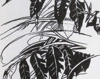Botanical Drawing Leaves and Grasses Original