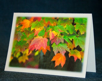 The Autumn Leaves Collection