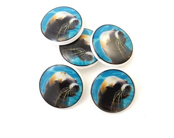Sea Lion Buttons.  5 Handmade Buttons made with my original photograph.
