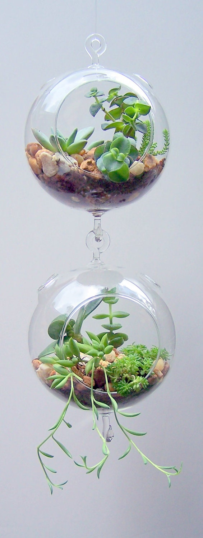 terrarium verre suspendu double crochet vertical jardinage. Black Bedroom Furniture Sets. Home Design Ideas
