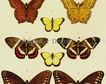 Butterflies Of The World Seba Entomology Insect Natural History Bug Lithograph Chart Poster Print