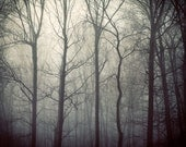 Fog, Fall Photography, Woodland, Autumn, Mist, Trees, Titanium, Monochrome, Silver, Grey, Charcoal - Tales from the Forest - EyePoetryPhotography