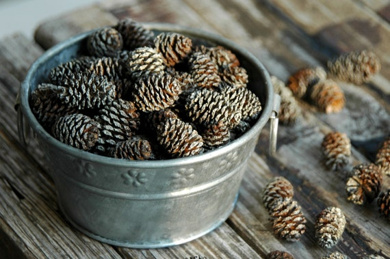 100 . Frosted Miniature Pine Cones . DIY Fall Wedding Decorations / Primitive Halloween Decor