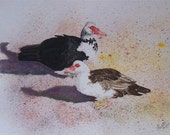 Muscovy Ducks 6 card pack