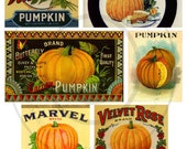 Instant Download - Digital Collage Sheet - Pumpkin Labels - Printable PDF or JPG File