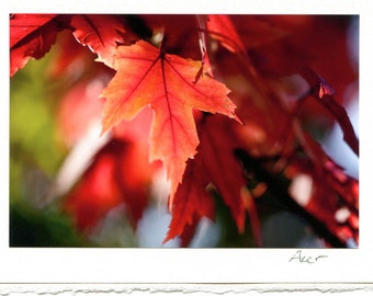 Three Greeting Cards / Autumn Wonders // maple / acer / glowing / fall / Herbst
