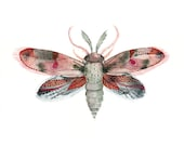 Moth- Fuschia, Red, Pink and Blue archival print of watercolor, minimalist