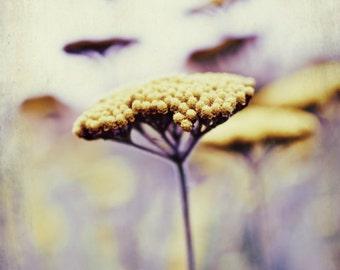 Botanical photography print purple plum mustard yellow wildflower wall art 'Wild Honey'