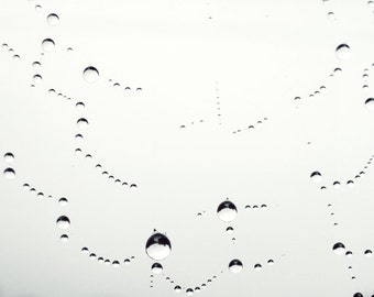 """Black and white photography print - delicate spider web with water droplets - abstract minimal white - nature photograph  """"Dew Drops"""""""