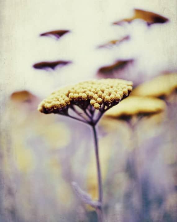 "Flower photography - floral wall art - purple plum - mustard yellow - wildflower wall art - dreamy ethereal botanical print - ""Wild Honey"""