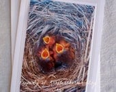 Photo Card Newly Hatched Baby Bluebirds
