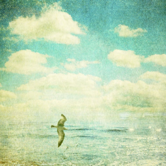 Seaside photography soaring bird surf photo bird print blue green turquoise sea teal green ocean seascape : Surface 8x8