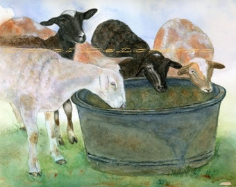 Watercolor Painting Sheep Art, Sheep Painting, Sheep Watercolor,  Lamb Art, Farm Animal Art, Print Titled Thirsty Sheep