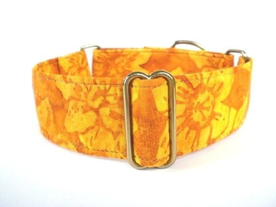 The Eclectic Hound's Daffodils Martingale Dog Collar