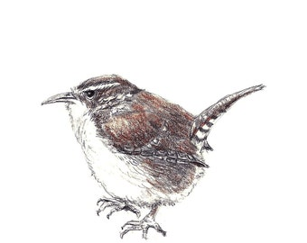 Bird Art - Little Wren Drawing - Bird Wall Decor