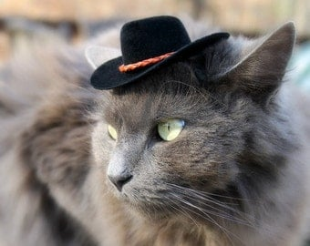 Cowboy Cat Hat - Buckaroo Style with Chestnut Leather Cord