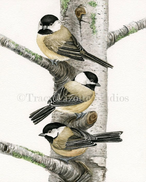 Chickadees in Birch Tree - 11x14 archival watercolor print by Tracy Lizotte