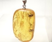 Pendant, handmade of a Baltic amber with 2 large fossils of insects. (EK59)
