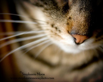 Cat Photography, fine art cat print