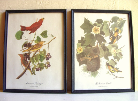 Pair of Vintage Bird Audubon Prints Pictures in Black Wood Frames Distressed