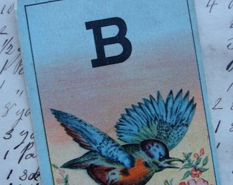 1800s Antique Beautiful Bird Images Lettered Flash Card for Altered Art