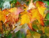 Autumn lliquid amber leaf print 10x15
