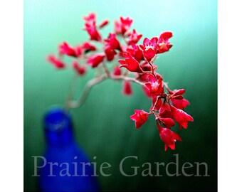 Meditation - Limited Edition Fine Art Photograph