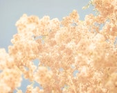Cotton Candy - 12 x 12 Fine Art Photograph - peach pink blue blossom flower tree spring sky home decor print