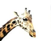 Giraffe brown white black art for nursery wildlife animal photography neutral - 8 x 10 fine art photo