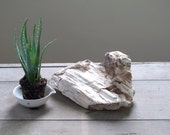 RESERVED... chunk of petrified wood