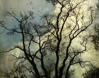 Tree Branches and Birds. Tree Photography, Fine Art Photography.