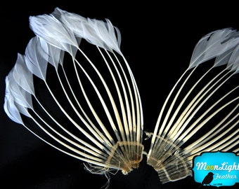 Feather Pad, 1 Piece - WHITE Duck Feather Center Stripped Fan: 678