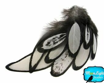 Hen Feathers, 1 Dozen - NATURAL WHITE Laced Hen Loose Rain Drop Hair Feather : 362