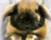 Sweet Dreams, bunny, rabbit, animal, pets, children, nature, joy, love, happyment, happy, furry, soft, cuddly