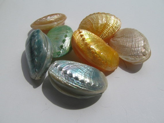 Genuine Shell Beads, Sealed, Dyed, Package of 7,  40mm X 34mm