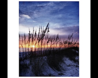 Sea Oats At Sunset 8X10 Fine Art Print