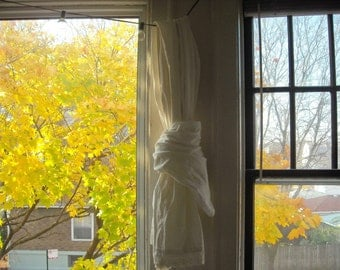nature photography, yellow maple leaves, tree, gold, golden, window, autumn, fall, Signed Print - GOLDEN AFTERNOON