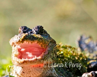 Allie Alligator wants to have lunch with You