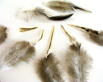 Golden Tan and Gray Paired Feathers for Earrings