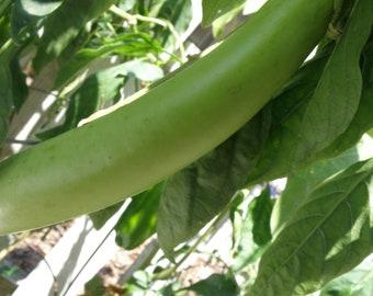 Louisiana Long Green Eggplant, Heirloom Seeds