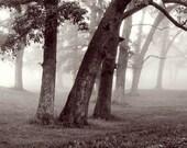 Foggy Landscape Photograph black white woods morning fog trees country 8x10 subtle