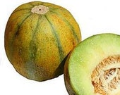 Melon, Ogen Heirloom Melon - Incredibly Smooth, Sweet, Juicy Organic Melon Every Kitchen Garden Should Grow at Least Once