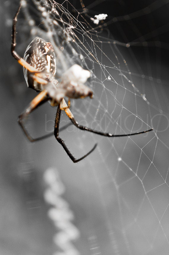 Halloween spider Photography eerie creepy spooky species legs black orange gray terror web pincers web - Arachnophobia - fine art photograph