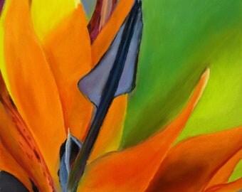 Tropical Bird of Paradise Flower - Original Pastel Painting