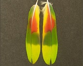 Matched Pair Dark Green, Lime Green, Red and Yellow Amazon Parrot Tail Feathers 4 3/4 inches